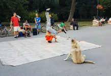 dog dances with breakdancers