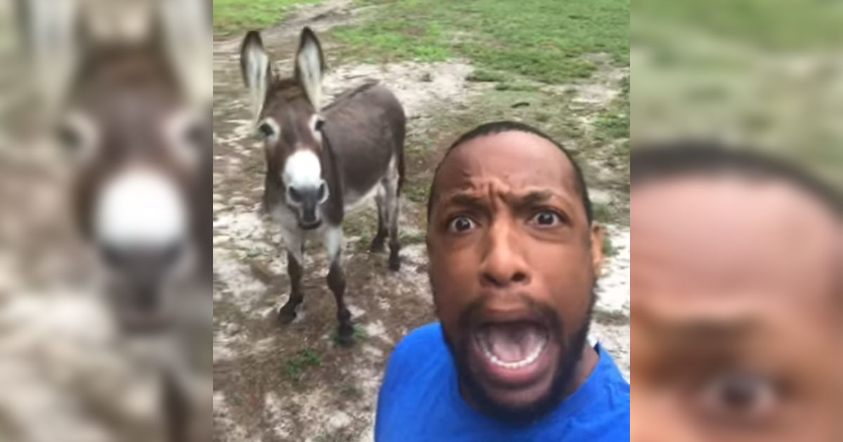 donkey joins man for a hilarious rendition of  u2018the circle of life u2019