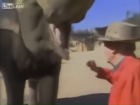 An Elephant Never Forgets Reunited With Trainer After 15 Years 10-23 screenshot