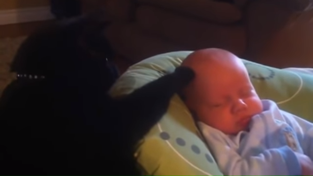 Cat Stops baby from Crying.....then kisses him! 0-55 screenshot