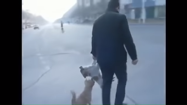 Loyal Dog Guards and Stands By Dead Canine Friend in Sub Zero Temperature in China _ Touching 0-45 screenshot