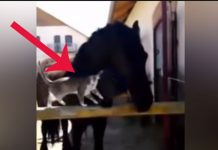 cat-and-horse-friends