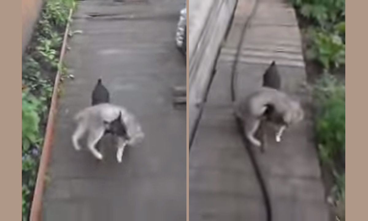 dog carried cat