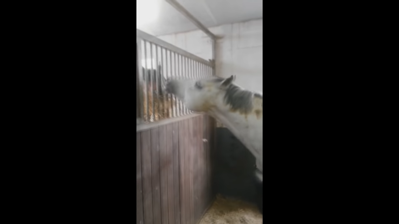 Horse feeding his friend 0-36 screenshot