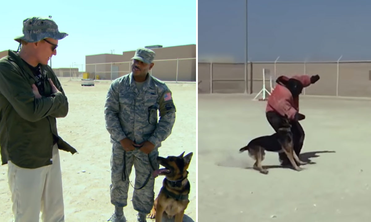 conan trains with military dog