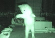 kitten-night-cam