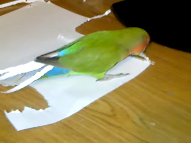 My love bird dose not like her shorter tail 0-46 screenshot