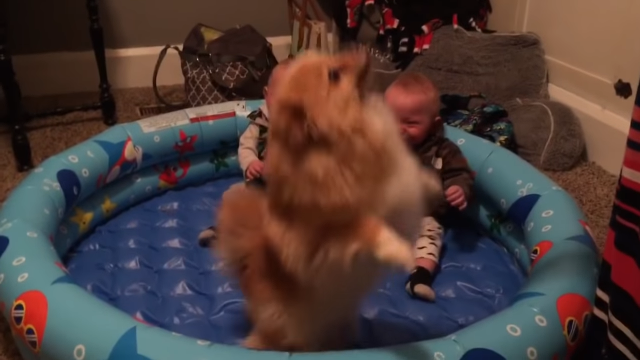 Twin Babies Can't Stop Giggling At Their Pomeranian 0-11 screenshot