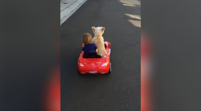 baby-and-pup-car
