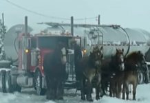 horses-and-truck