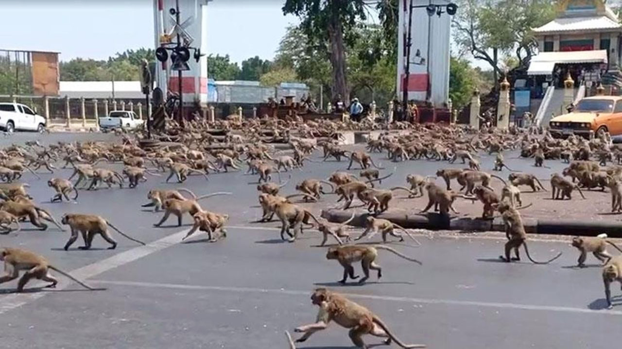 monkeys on the street