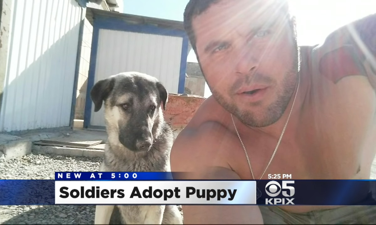 soldier adopts iraq puppy
