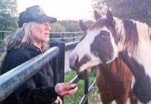 willie rescues horses
