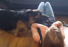 clingy-gsd