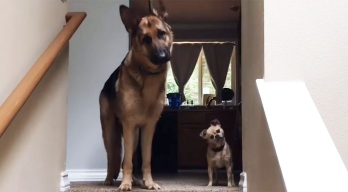 kid-reunion-with-dogs