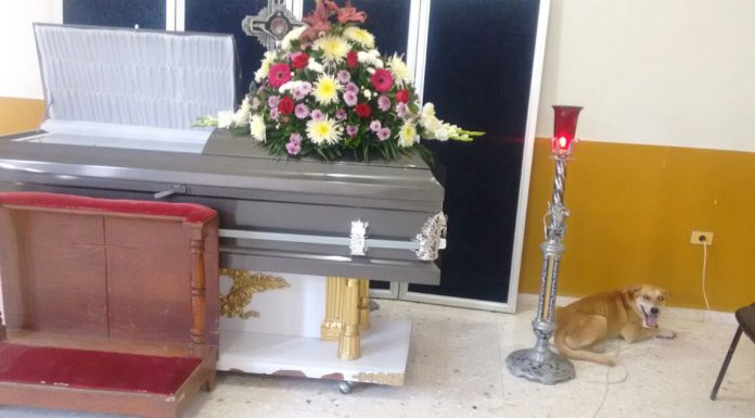 missing dog funeral ceremony