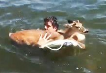 patrick-saves-deer