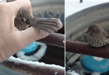 sparrow stuck frozen
