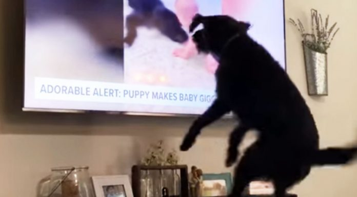 adorable-pooch-starts-jumping