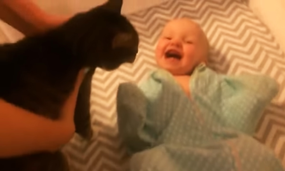 baby and cat excitement