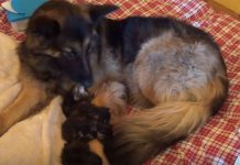 brooke-adopts-kittens