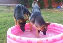 gsd-in-pool