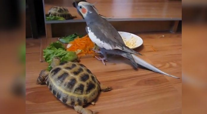 parrot-and-turtle-mirror