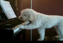 singing-dog-and-piano