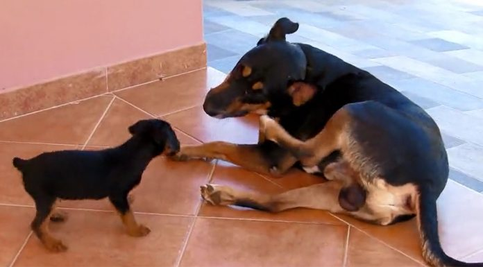 puppy-and-tail