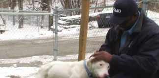 Stranger Captures Footage of a Man Abandoning Dog Who Gets Adopted 30 Minutes Later