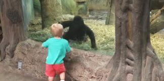 baby with gorilla