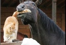 horse loves cat