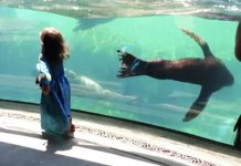 sea lion worried about kid
