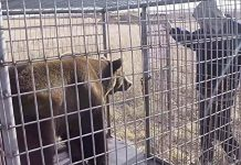 17 bears rescued