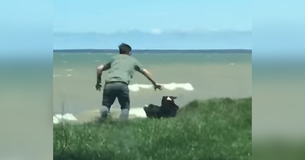 saving-dog-from-rolling-off-cliff