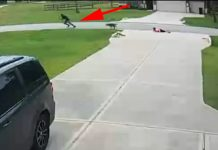teen-saves-child-from-dog