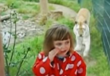 tiger surprise little girl