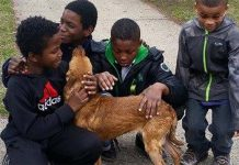 abandoned-dog-saved-by-boys