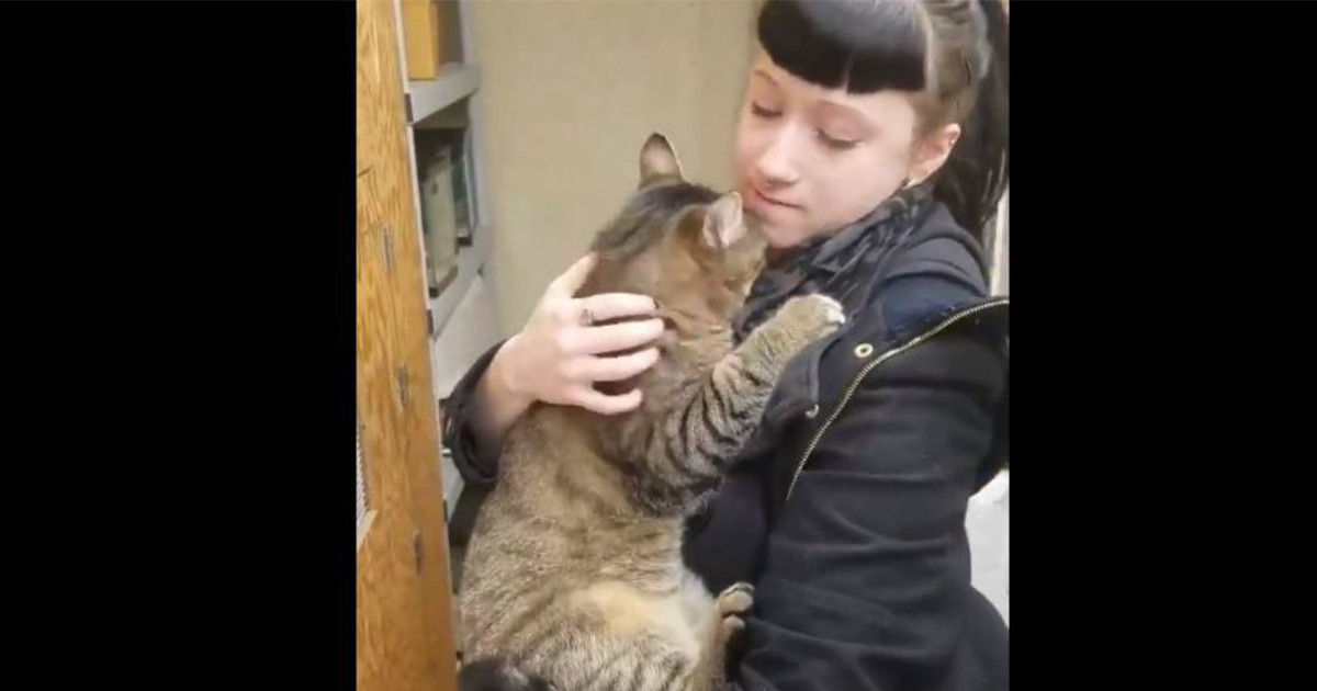 cat-found-forever-home