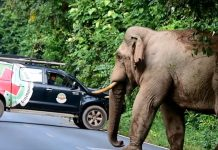 park-rangers-moves-on-elephant