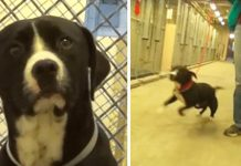 shelter-dog-getting-a-home