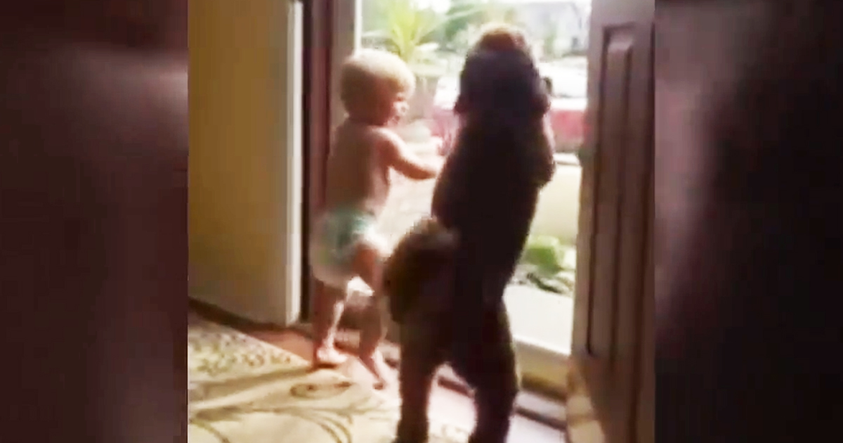 toddler-and-dog-reacts-on-dad