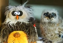 baby-owl-with-toy-owl