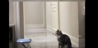 cat-reaction-on-dead-friend