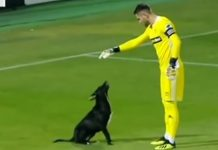dog-demand-on-soccer