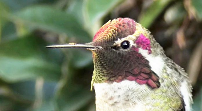 hummingbird-and-colors