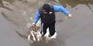 man-rescues-dog-in-river