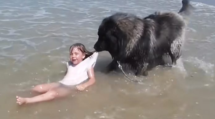 dog-rescues-girl