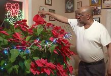 man-grows-miracle-poinsettia