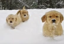 puppies-play-snow